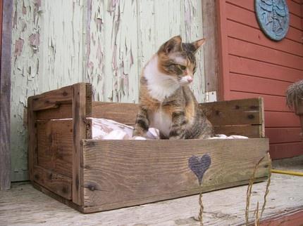 fruit crate pet bed :)