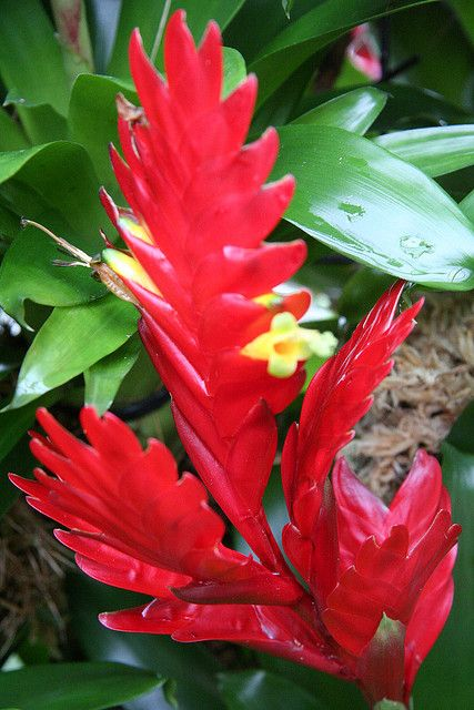 Tropical plant at Kew by Pete Reed