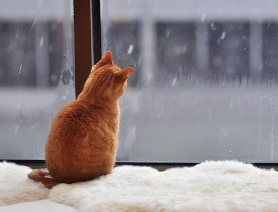 Cat staring at snow..