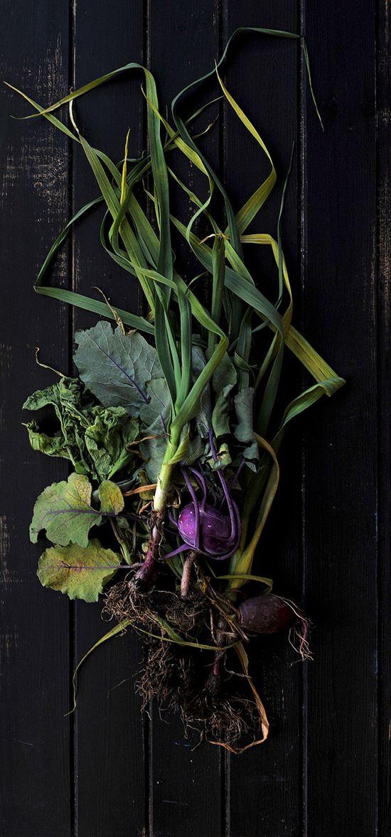 Dark Winter Roots
