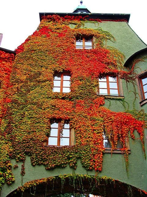 ~~autumn