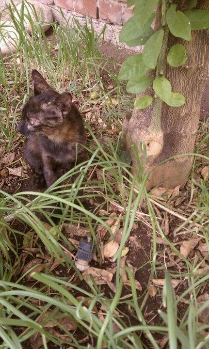wild cat #wild #animals