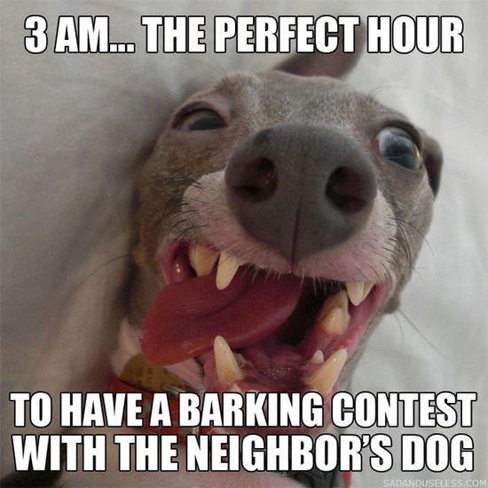 bad dog...
