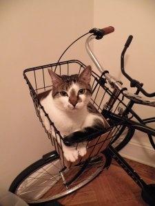 me likey bike rides!