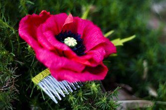 photo gallery - the crimson poppy