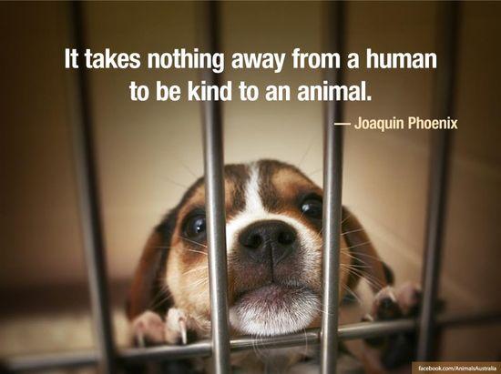 (via Animals Australia on Facebook)