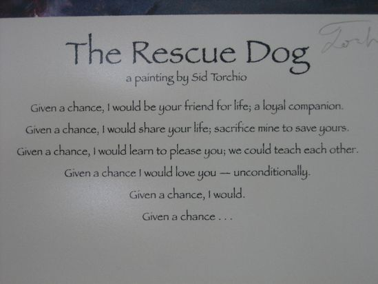 The Rescue Dog - I think it applies to everyone - Given a chance :)