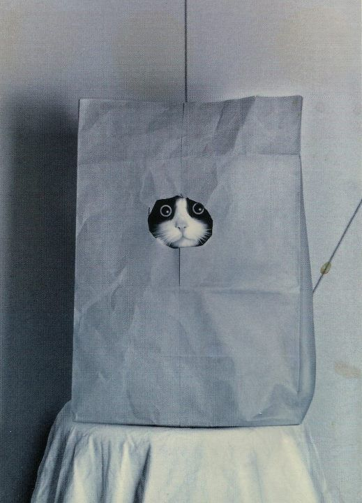 .this is the cat in the bag!