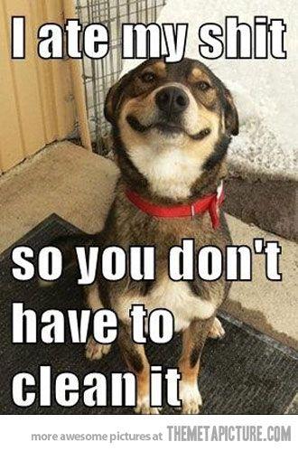 Good dog...lol