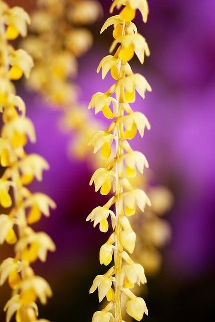 yellows & purple