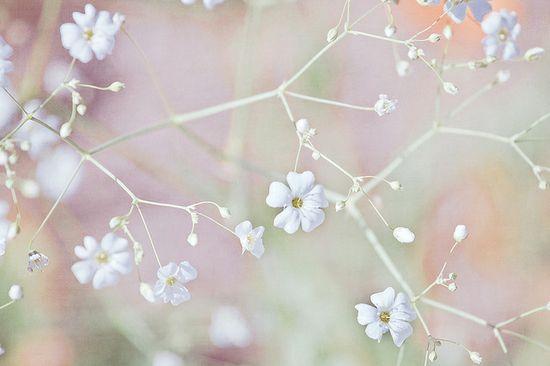 Pastel Wonderland