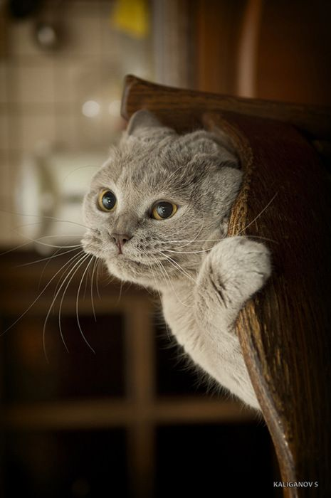 Pricelessly fantastic expression! #cat #kitty #kitten #cute #pets #animals
