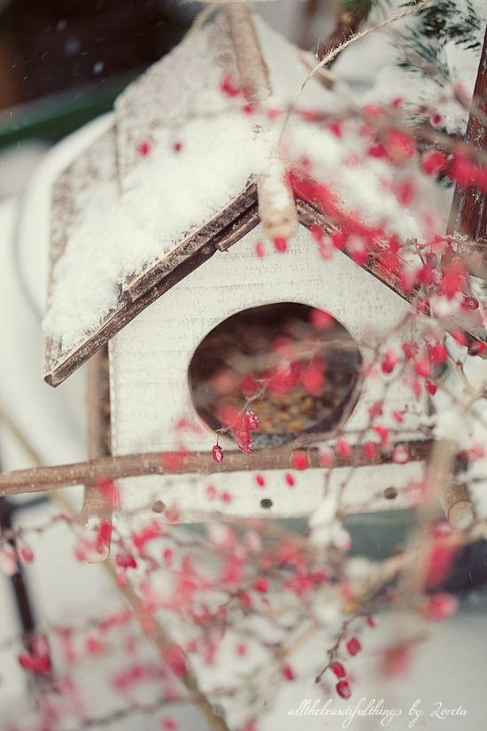 Winter bird house.