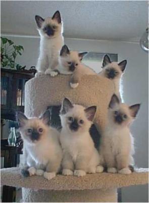 6 kittys!