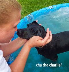 Cha-Cha Charlie is an adoptable Hound Dog in Mechanicsburg, PA. Cha-Cha Charlie is a lovable pup who found himself in a high kill shelter with his brother, Cha-Cha Chad. Poor Charlie has probably nev...