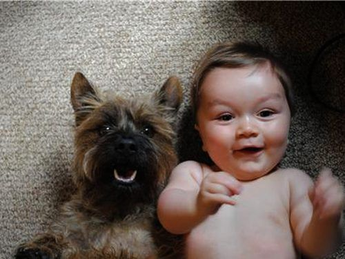 dog and baby #cute #animals #dogs #looks #like #funny #adorable