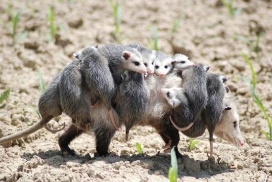 Animal Moms Who Just Need A Break