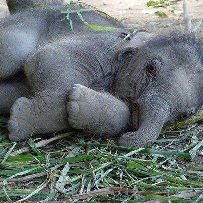 Precious baby               animal planet
