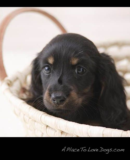 i'll just wait in this basket • from  APlaceToLoveDogs.com • dog dogs puppy puppies cute doggy doggies adorable funny fun silly photography