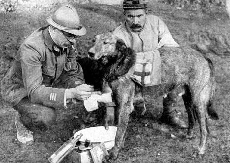 WWI. Tending wounded Red Cross dog by Little a o, via Flickr
