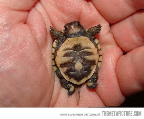 funny-baby-turtle-hand-cute