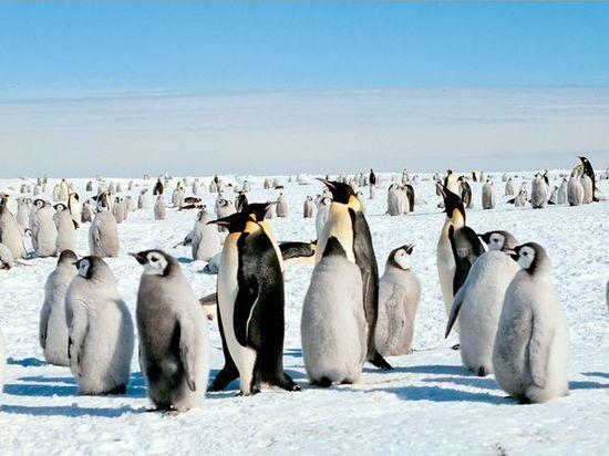 penguins, penguins, and more penguins.