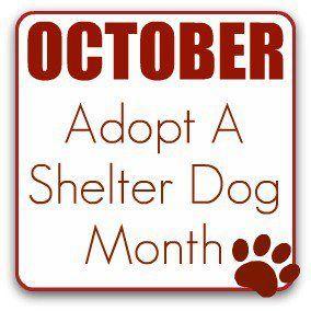 Please adopt! ?