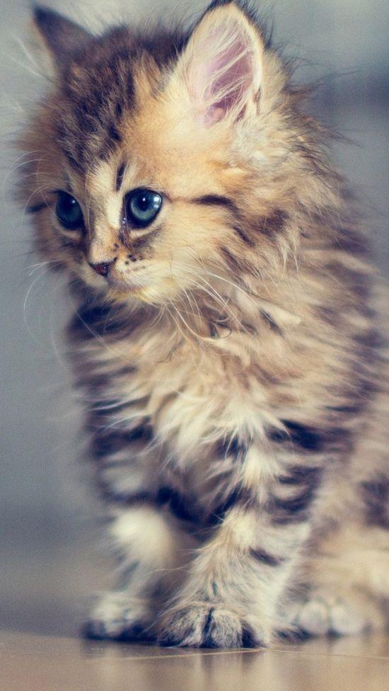 kitty @MiKayla Rogers