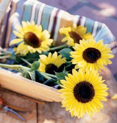 Grow a Great Cutting Garden