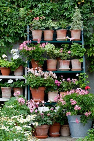 geranium pots on ladder