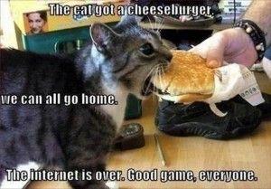 a the cat finally got a cheeseburger