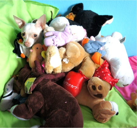 animals with stuffed animals