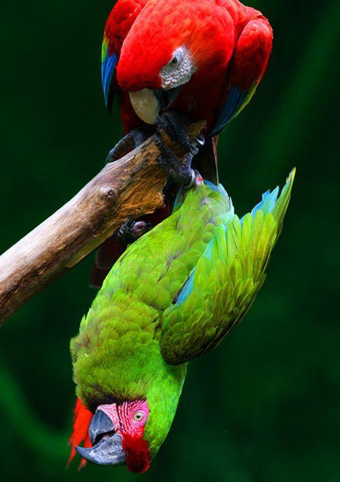 splendidis aviarium