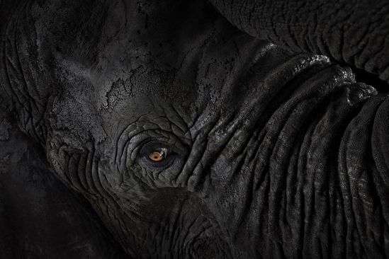 Rhino: Incredible Studio Portraits of Wild Animals by Brad Wilson