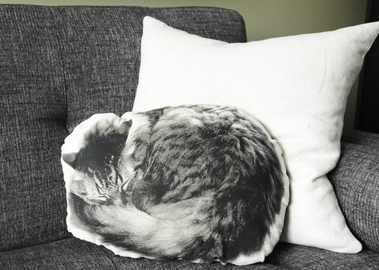 sleeping cat pillow #cat #kitty