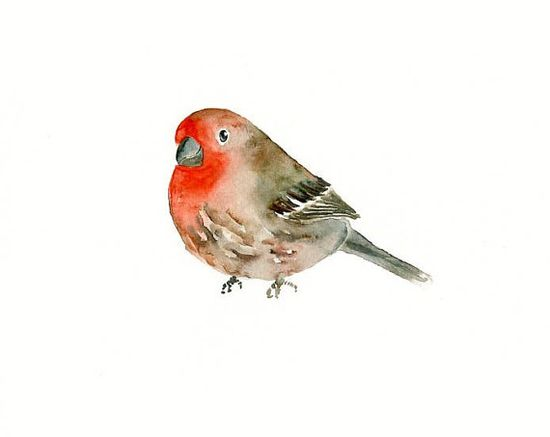 beautiful watercolored bird