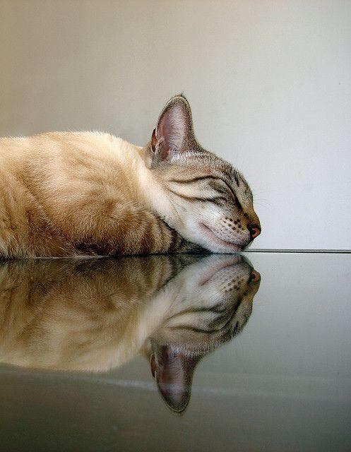 A cat in repose....so sweet....