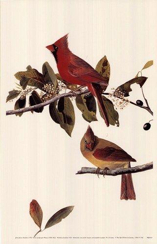 Audubon print - Northern cardinal