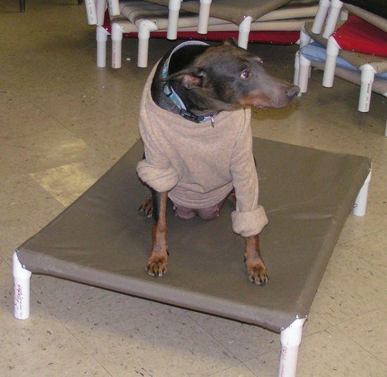 PVC dog bed plans