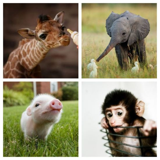 Baby animals ?