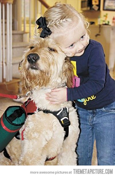 best friends ? this dog has a very important job, he carries around this 2 year old's oxygen tank