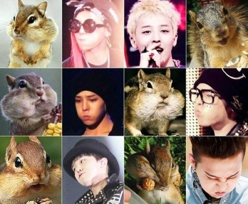 G-Dragon shares photo set of himself compared to hamsters