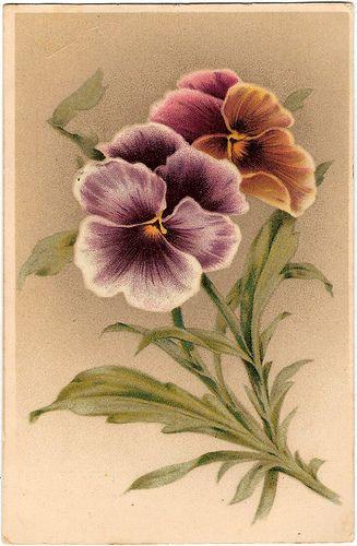 Vintage postcard ~ Pansies