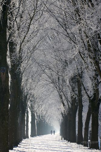tree lined winter path