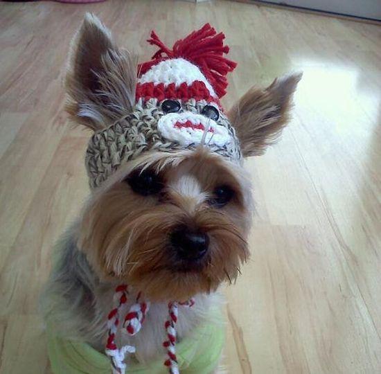 adorable #adorable #cute #topanimals