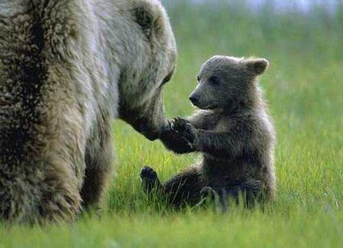 I love animal babies and their mamas.
