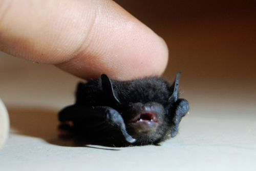 No! Stop touching me! I AM THE NIGHT!