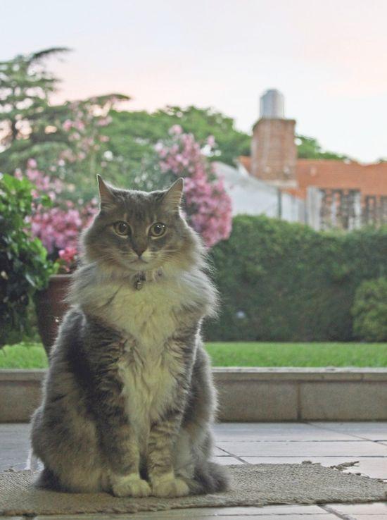 CUTE CAT PICS