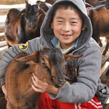 Did you know that each gift of a Heifer International goat provides a family with milk, cheese and butter for nourishment, boosts income through sales of extra milk and wool, AND encourages better crop yields by creating fertilizer and clearing land? #goatsrule