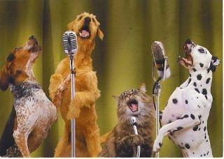 dogs sing & 1 cat